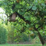 Apfelbaum (Herbst)