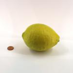 Zitrone (Citrus × limon)