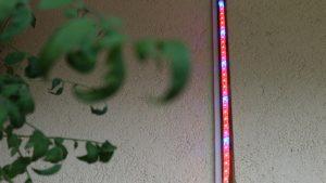 LED-Pflanzenlicht