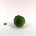 Limette (Citrus × latifolia)